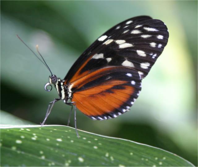 Papillon de mes reves