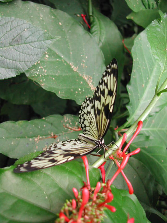 Papillon en équilibre