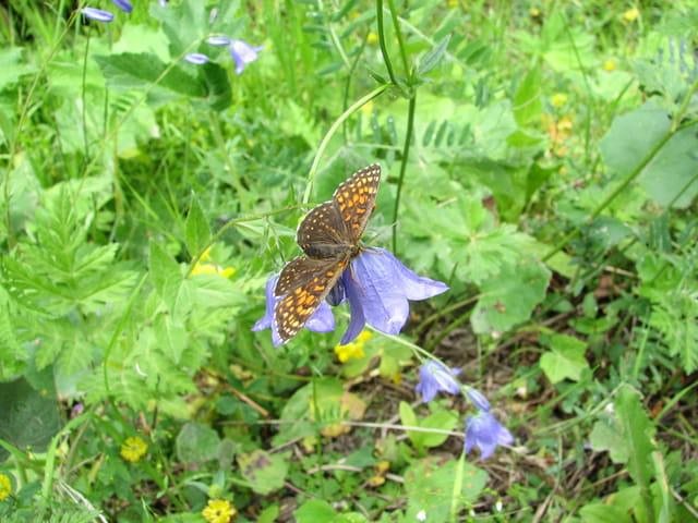 Papillon en équilibre sur clochette