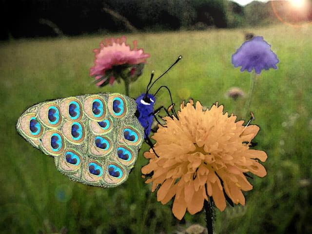Papillon-paon