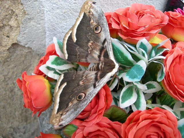 Papillon sur des fleurs artificiell