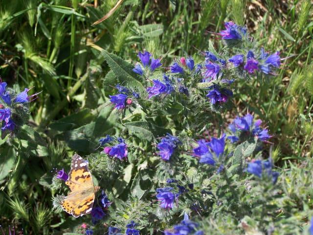 """papillon sur du bleu """"de la couleur de la mer et  du beau ciel bleu d'hier"""""""