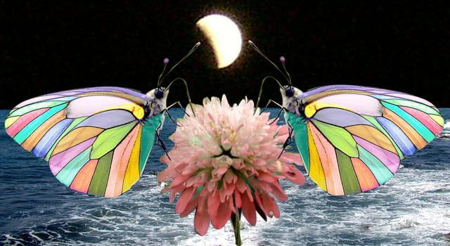 Papillons arc en ciel
