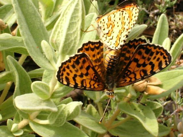Papillons en amour