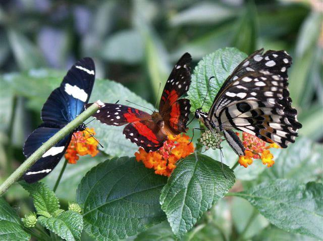 Papillons en famille