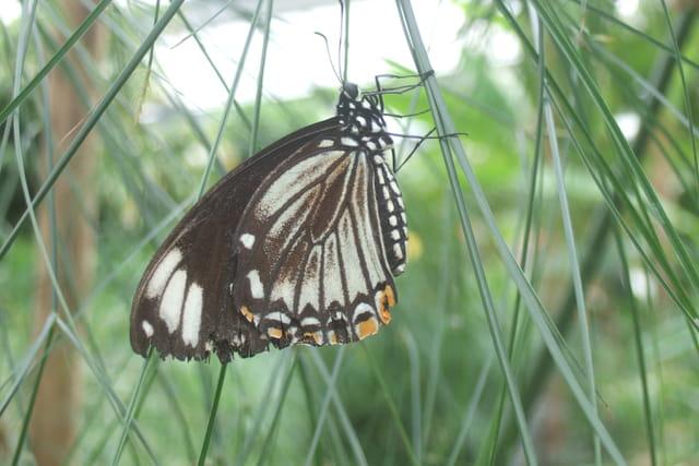 Papillons,les merveilles de la nature