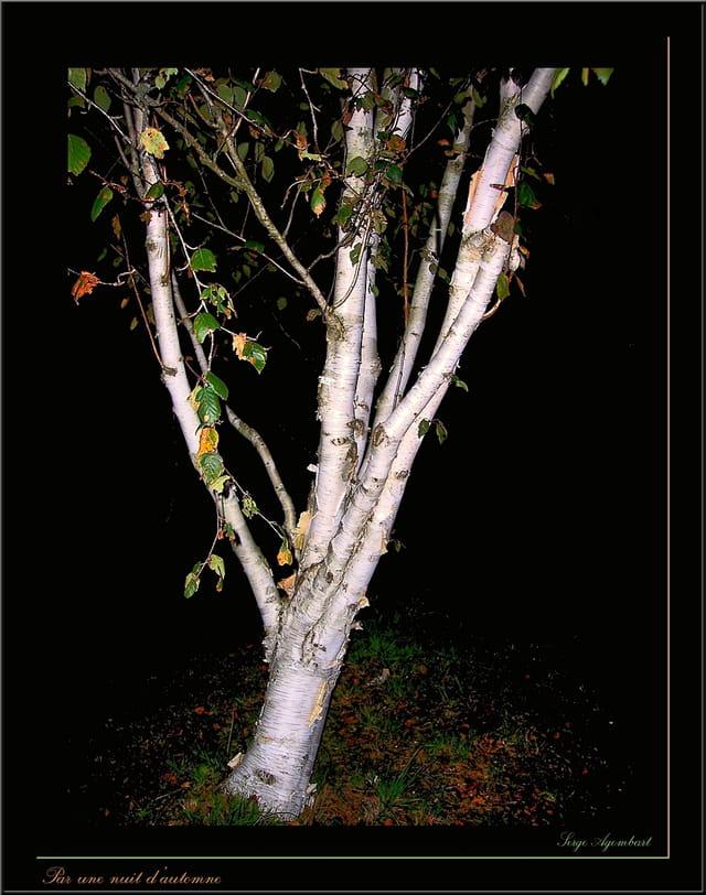 Par une nuit d'automne