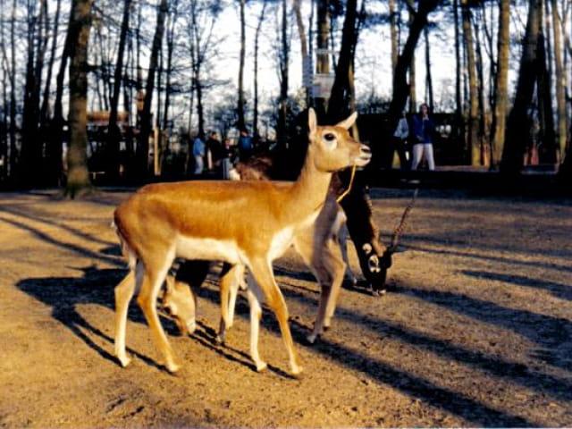 Parc Animalier...