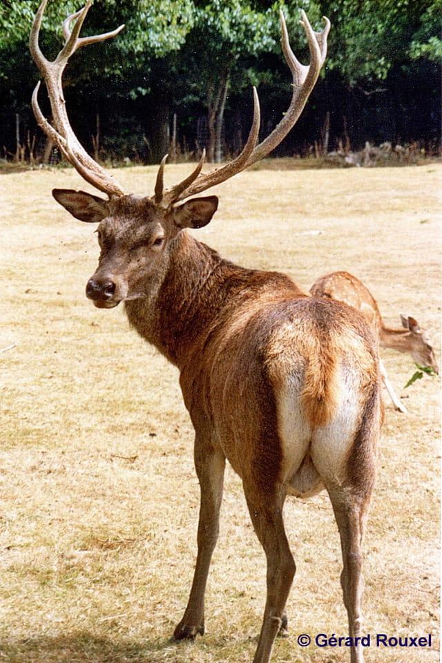 Parc Animalier Chaumont sur Tharonne aout 1988