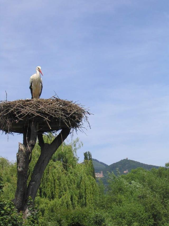 Parc d'Unawhir en Alsace