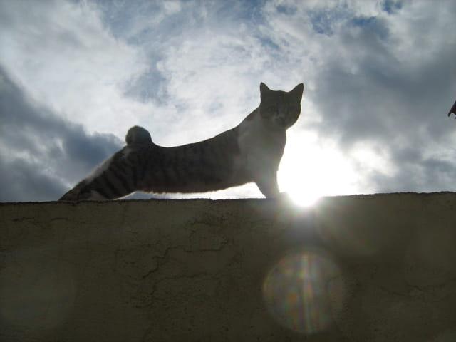 Paresse de chat