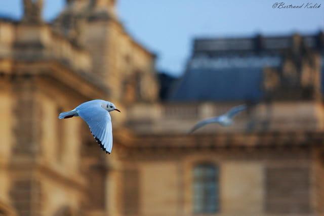 Parisian flight