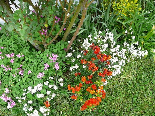 Parterre printanier  de fleurs