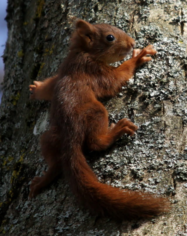 pas tres rassure ce petit ecureuil