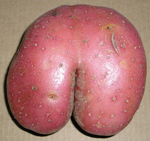 Patate-fesse