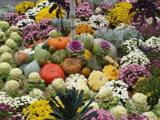 Patchwork de légumes