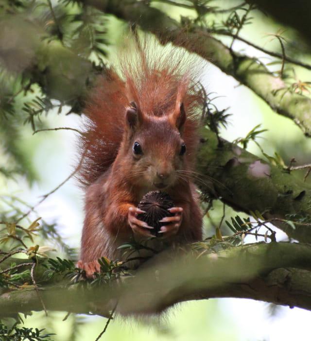 Pause casse-croûte pour l'écureuil