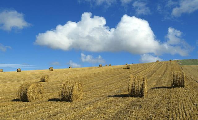 Paysage agricole du Boulonnais