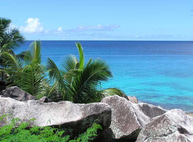 Paysage d'hiver... aux seychelles!