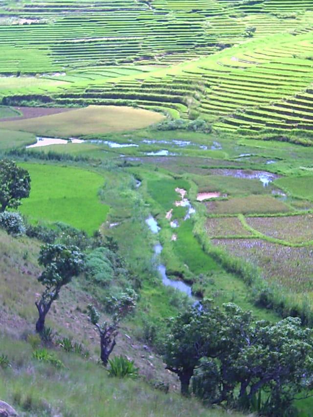Paysage de rizière