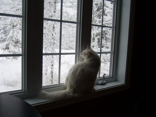Paysage féérique d'hiver