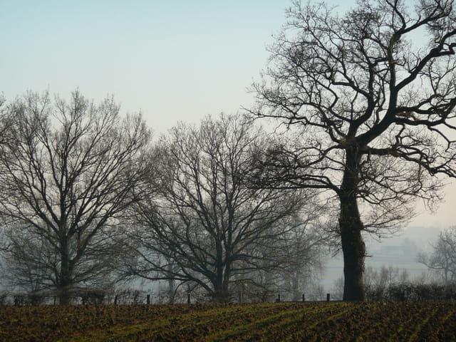 Paysage hivernal de Lugny