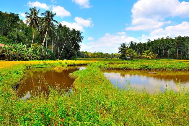 Paysage tropical de l'île de Bohol