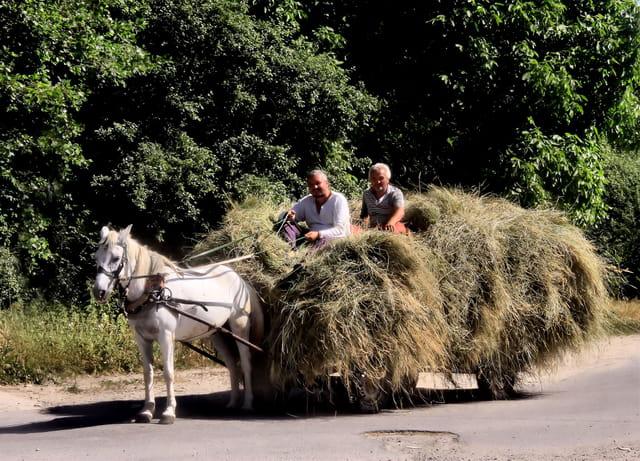 Paysans Bulgares au travail...
