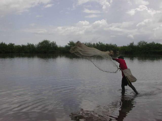 Pêche à l'épervier