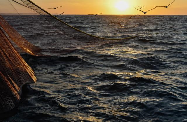 Pêche à la sardine