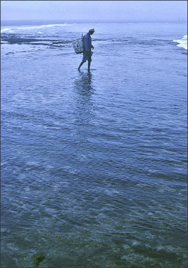 Pêcheur à pied ...