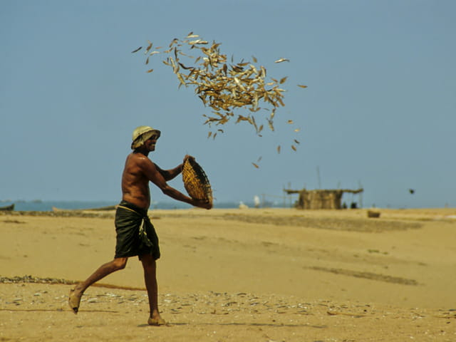 Pêcheur de Mangalore