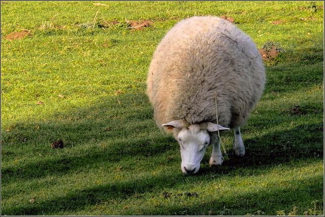 pelote de laine par serge agombart sur l internaute