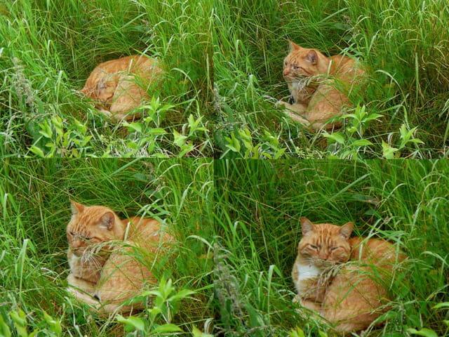 Pensées d'un chat dans les hautes herbes