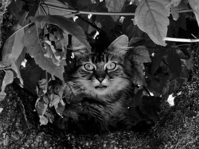 Perchée sur l'arbre