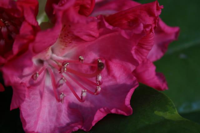 Perles de fleur