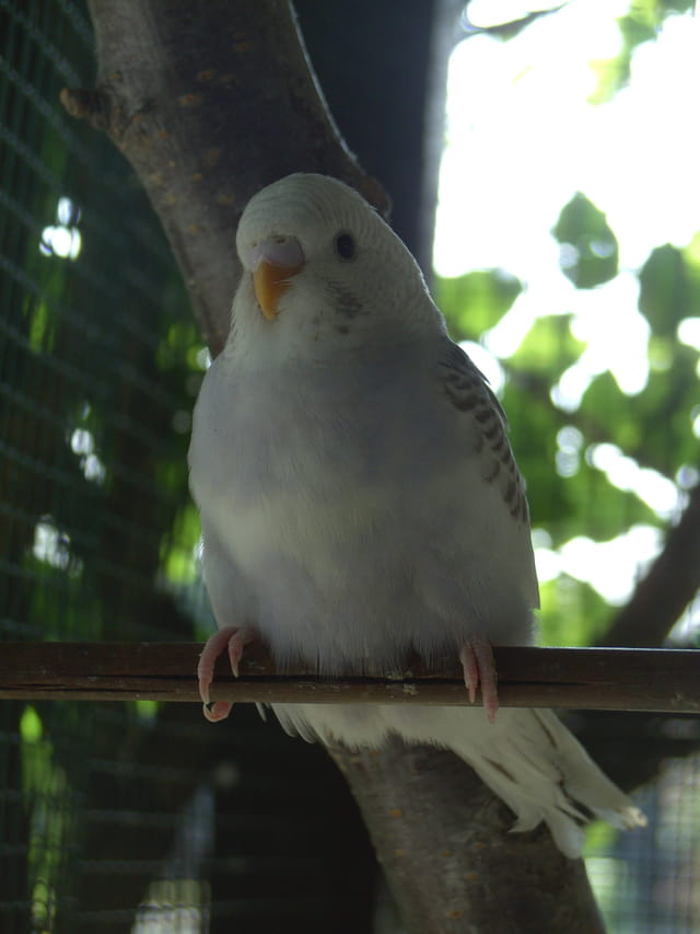 perruchon Nuage