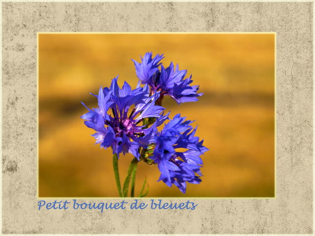 Petit bouquet de bleuets