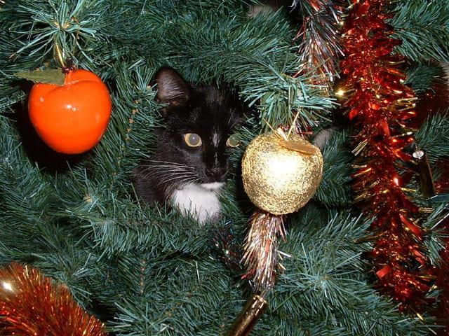 Petit chat dans le sapin de noël