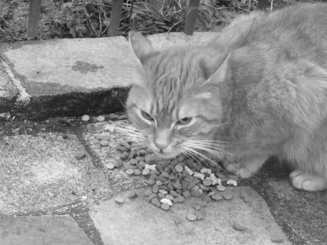 Petit chat errant
