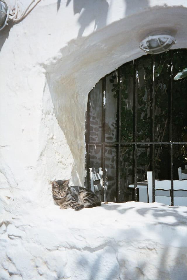 Petit chat grec au soleil