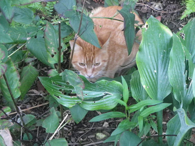 Petit chat roux errant