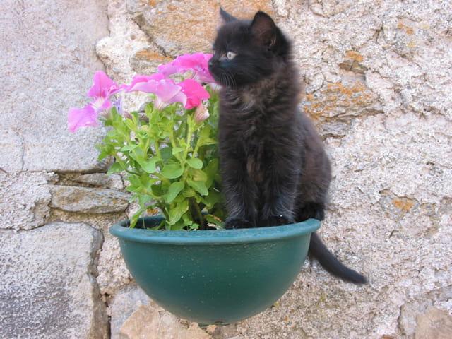 Petit chat sage