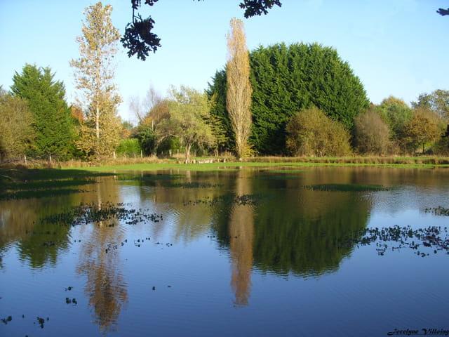 petit étang de Sologne (1)