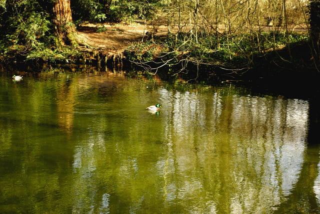 Petit lac tranquille