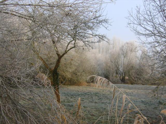 Petit matin d'hiver