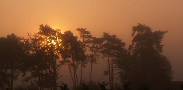 Petit matin tout en couleur à Brocéliande