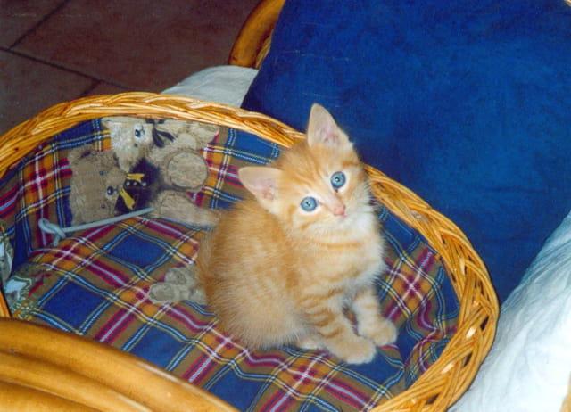 Petit minou aux yeux bleus