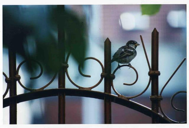 Petit oiseau du matin