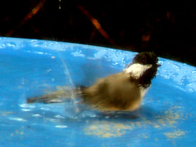 Petite baignade en temps de canicule
